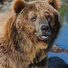 Grizzly by JimGuy