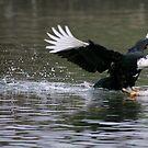 Smooth Landing by Randall Ingalls