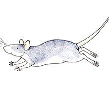 Run Ratty Run by sillybadger
