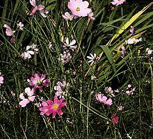 Wild Flowers by Jimmy McHugh