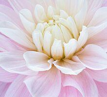 Softly by Marilyn Cornwell