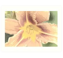 Orange Asiatic Lily Sketch1 Art Print