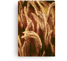 Wild Harvest Canvas Print
