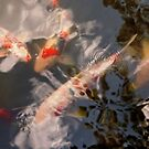 Animal - Fish - Being koi by Mike  Savad
