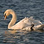 Swan, West Hanningfield by DonMc