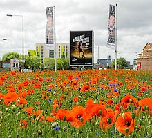 A sea of poppies by Beverley Goodwin