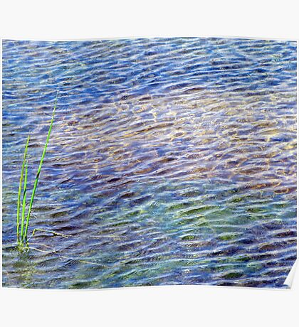 reeds and ripples Poster