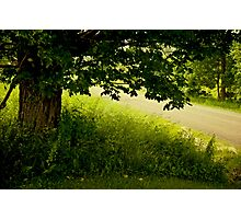 Along the Lane Photographic Print