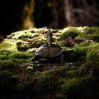 The Slow Wanderer by Cyanidejack