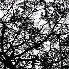 Native pine against spring sky by Kiriel