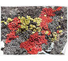 Colourful Lichens Poster