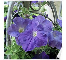 Petunias in a Basket Poster