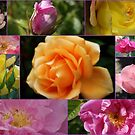 "Beautiful ""Roses"" Collage by Sandra Cockayne"