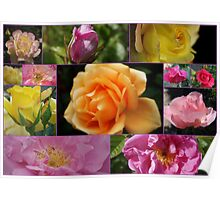 """Beautiful """"Roses"""" Collage Poster"""