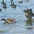 Duck Duck GOOSE by Karen K Smith