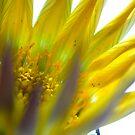 exploding flower by yvesrossetti