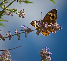 butterfly and lavender  by Mark de Jong