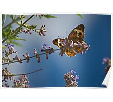 butterfly and lavender  Poster