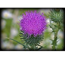 Poking Purple Photographic Print