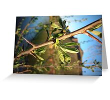 Young Russian Olive Greeting Card