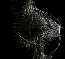 Thistle prior to birthing by Bajantraveller