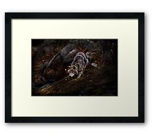 Timberwolf  3 - Photoshop Manipulation Framed Print