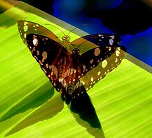 Butterfly shadow dreaming by Virginia McGowan