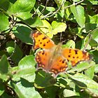 Butterfly on Leaves by rockinmom5509