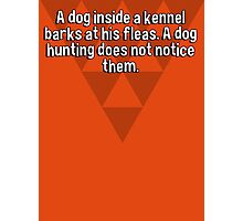 A dog inside a kennel barks at his fleas. A dog hunting does not notice them. Photographic Print