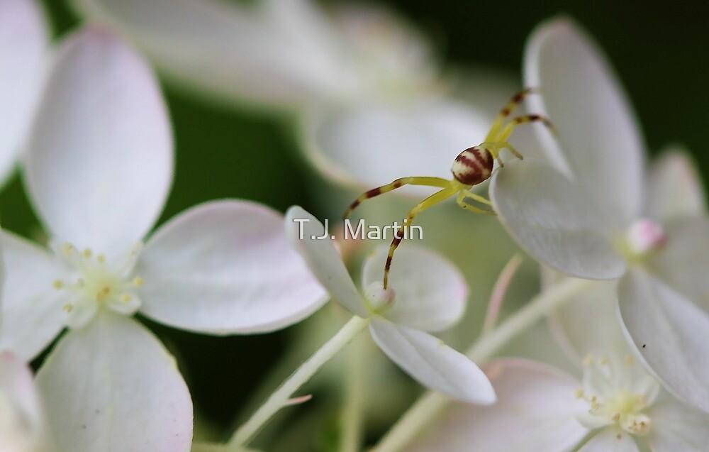 Hydrangea Flower - Yellow Spider by T.J. Martin