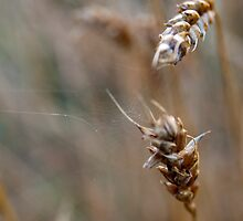 Silk and Straw by atlasthetitan