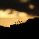 Sunset Crop by Steiner62