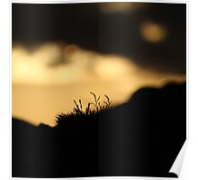 Sunset Crop Poster