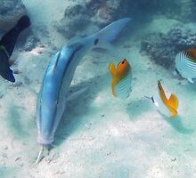 Fish Meeting by Michael Treloar