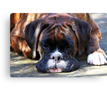 Such is Life -Boxer Dogs Series- Canvas Print