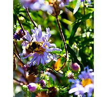 Bumble Bee 2 Photographic Print