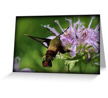 Hummingbird Moth Summer Greeting Card