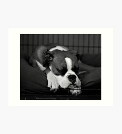 Ziggy Nap Art Print