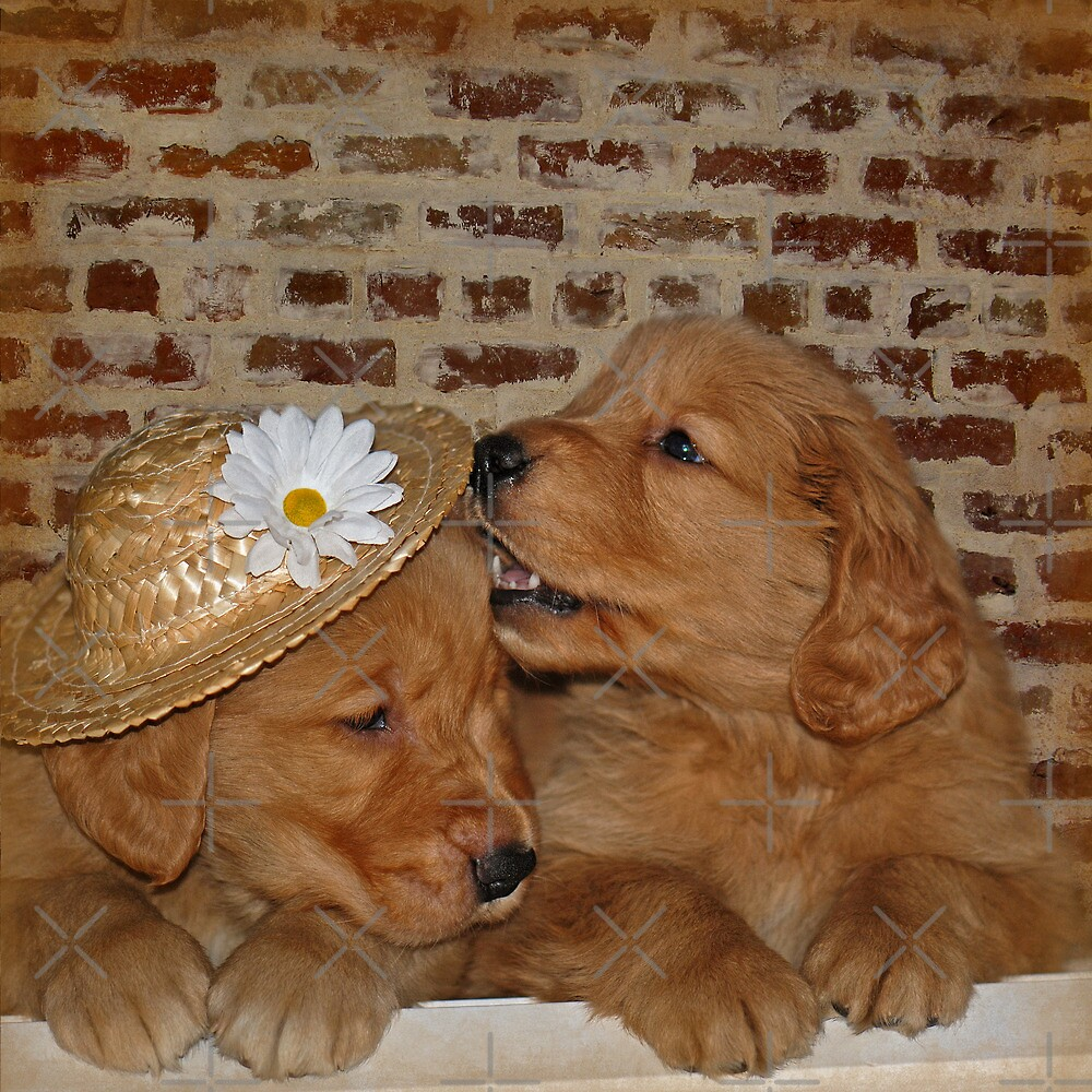 Goofy Goldens by Maria Dryfhout