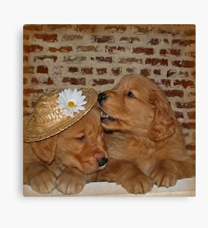 Goofy Goldens Canvas Print