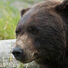 Alaskan Brown Bear by Cheryl  Lunde
