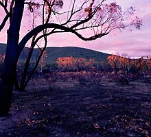 Purple Dusk, Burnt Earth by mgimagery