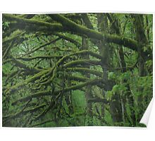 Moss-covered Forest Poster