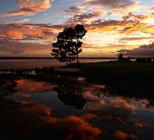 Sunset Reflection by Judy Vincent