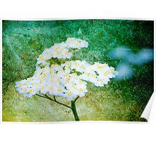 Oregon Wild Flowers Poster