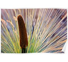Grass Tree Regrowth Poster