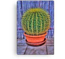 HDR Cacti Canvas Print
