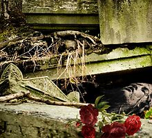 A rose entombed by cosmiqueus