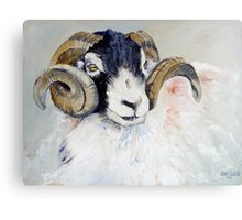 Swaledale Ram Canvas Print