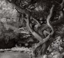 Landscape - The Forbidden Forest Sticker
